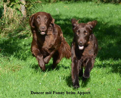 Dancer und Funny Apport